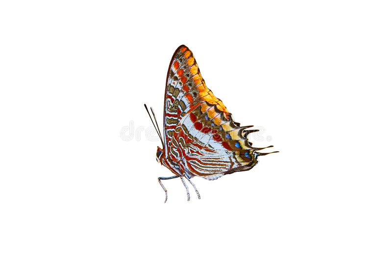 Der bunte Schmetterling auf weißem Hintergrund lizenzfreies stockbild