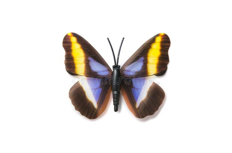 Der bunte Schmetterling lokalisiert auf weißem Hintergrund stockfotos
