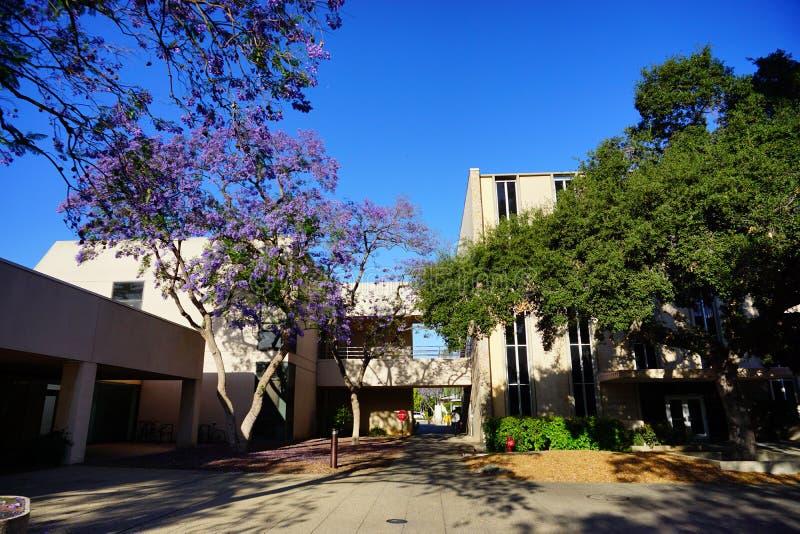 Der Campus von Caltech stockbilder