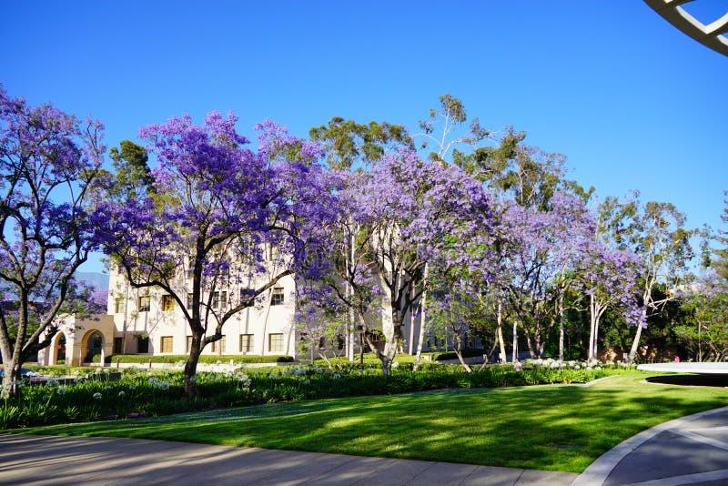 Der Campus von Caltech lizenzfreies stockfoto
