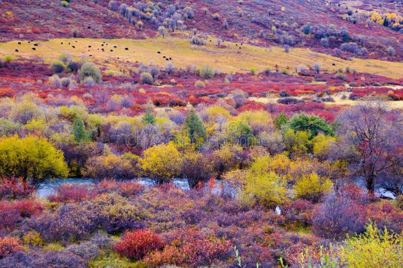 Der colorized Rangeland stockfoto