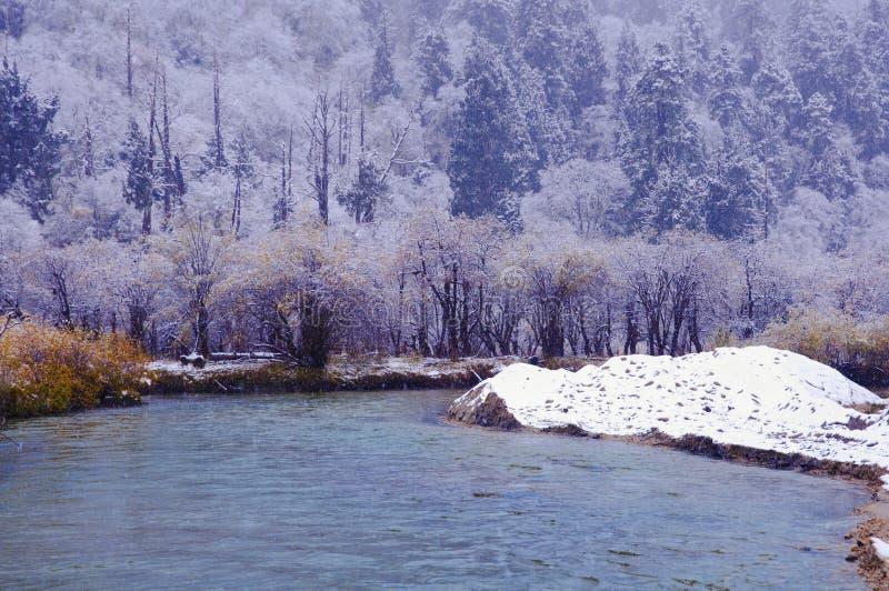 Der colorized Wald beim Schneien stockbild
