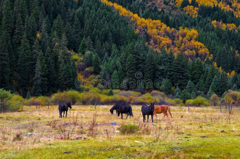 Der colorized Wald und das Pferd lizenzfreie stockfotos