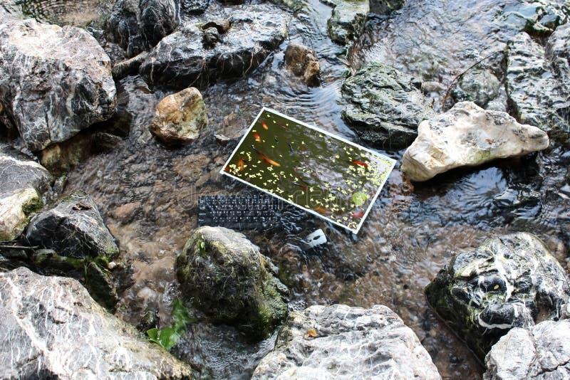 Der Computer unter der Oberfläche des Wassers mit den Fischen schwimmen auf dem Schirm stockbilder