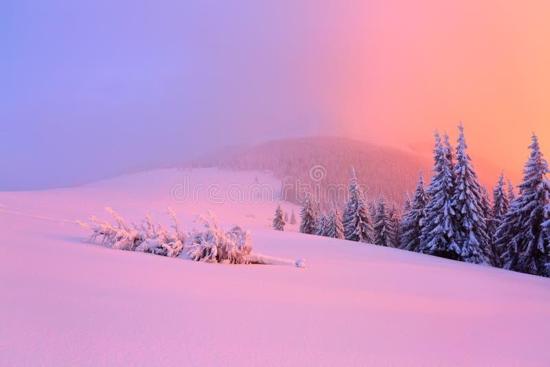 Der defekte Baum, der mit Schnee bedeckt wird, legt auf schneebedeckten Rasen stockfotos