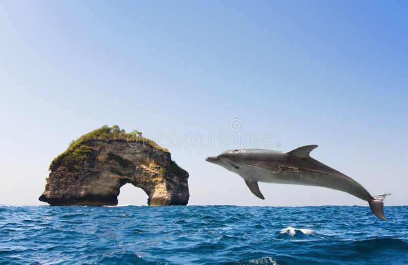 Der Delphin springt von den Wellen in Ozean heraus stockfoto