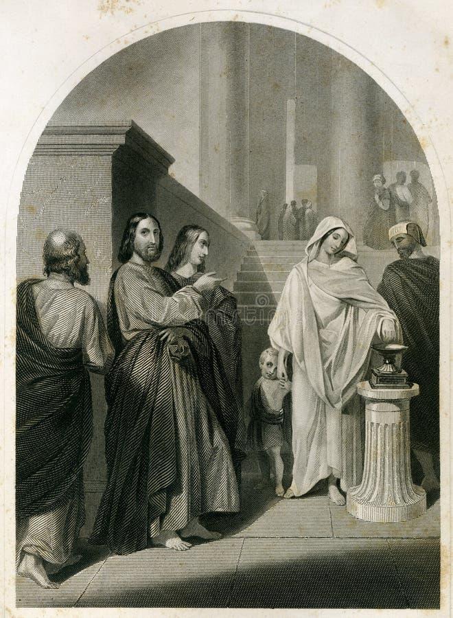 Der die Milben-die Männer Witwe und die Frauen-antike Illustration lizenzfreie abbildung