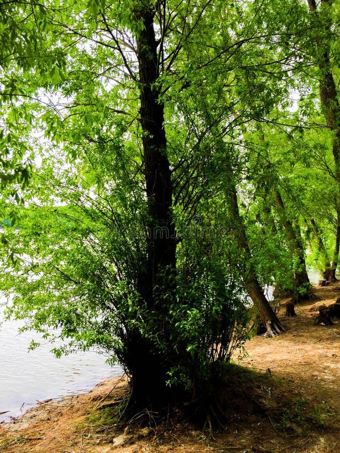 Der dobrogean Wald lizenzfreies stockfoto