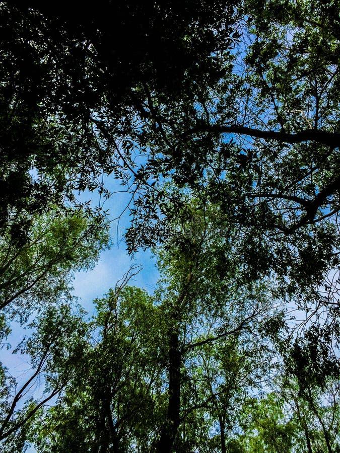 Der dobrogean Wald stockbilder