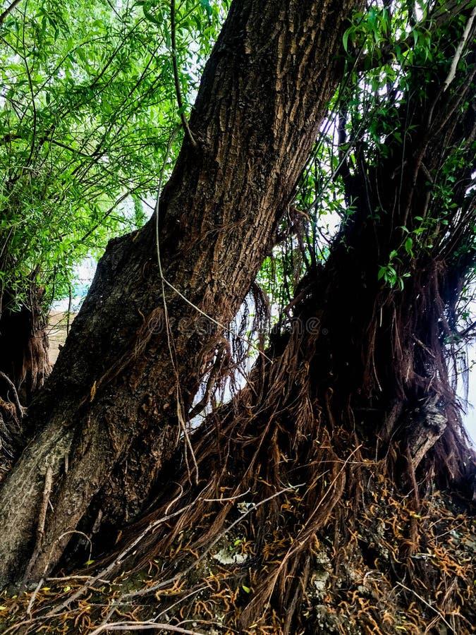 Der dobrogean Wald lizenzfreies stockbild