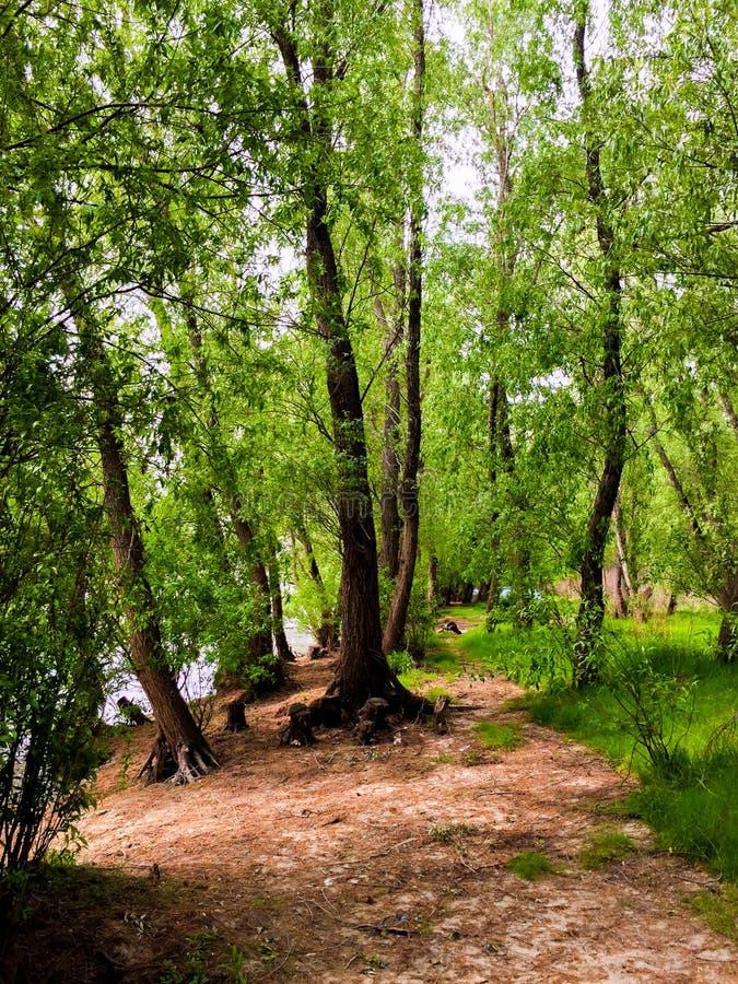 Der dobrogean Wald lizenzfreie stockbilder
