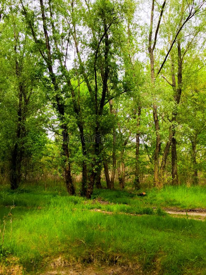 Der dobrogean Wald lizenzfreie stockfotografie