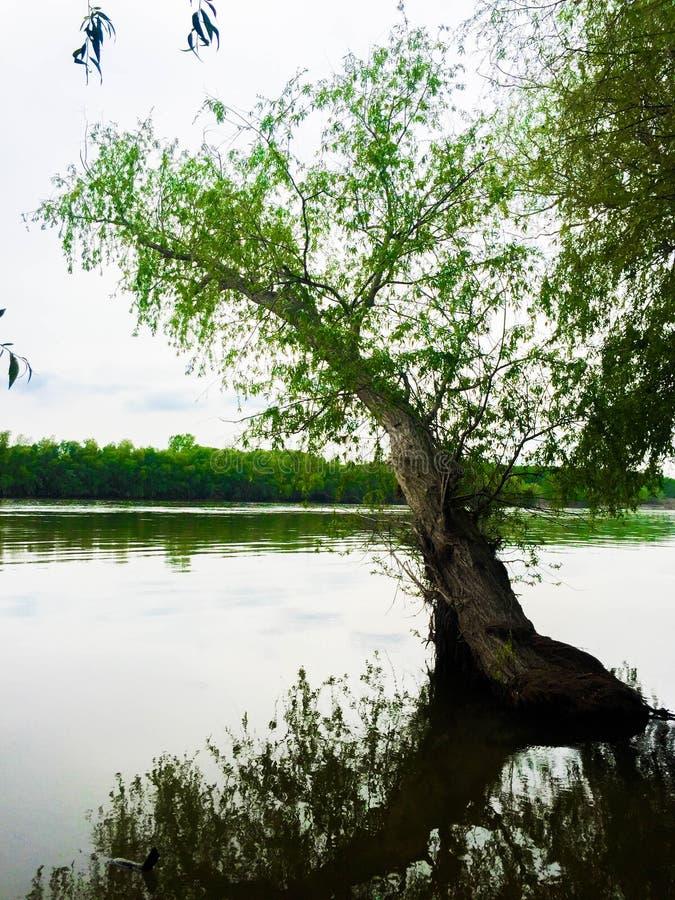 Der dobrogean Wald stockfotos