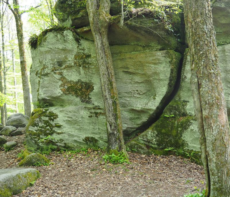 Der Donner schaukelt am Allegany-Nationalpark stockfoto