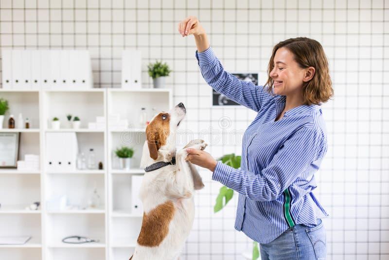 Der Eigentümer spielt mit seinem Hund vor der Aufnahme in der Veterinärklinik Unscharfer Hintergrund der Veterinärklinik stockfoto