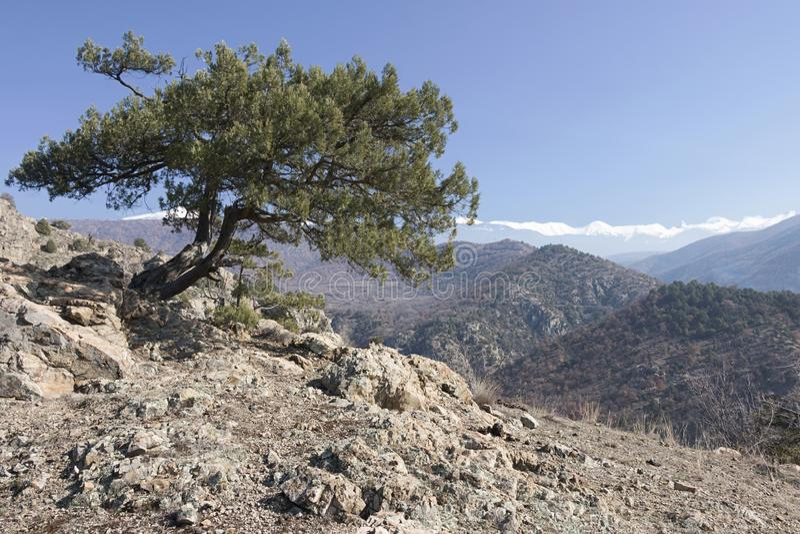 Der einsame Baum lizenzfreies stockfoto