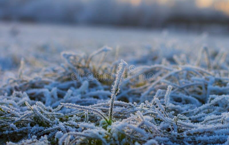 Der erste Schnee hat das Gras bedeckt stockfotos
