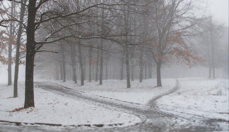 Der erste Schnee im Stadtpark Russland, UralJanuary, Temperatur -33C Nebeliger Morgen stockfoto