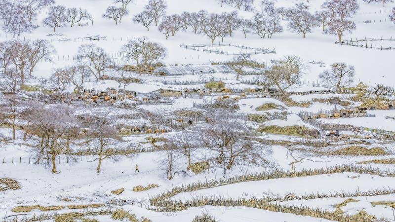 Der erste Schneebauernhof stockfoto