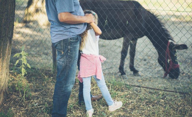 Der Esel ist ein Teil unseres Bauernhofes lizenzfreie stockfotografie