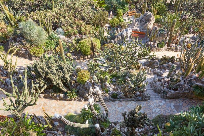 Der exotische Gartenweg mit seltene saftige Betriebshoher Winkelsicht in Monte Carlo, Monaco stockbilder