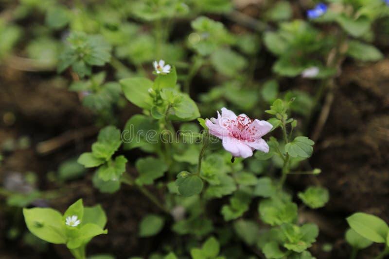 Der Fall der Pflaumenblüte lizenzfreie stockbilder