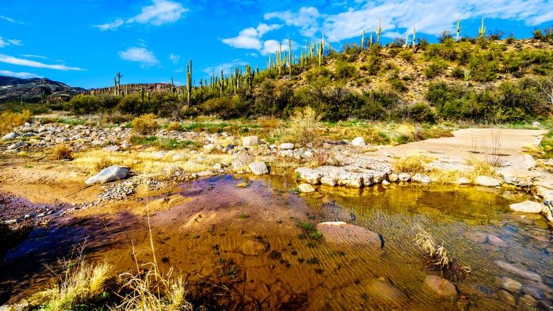 Der fast trockene Platanen-Nebenfluss im McDowell-Gebirgszug in Nord-Arizona lizenzfreies stockbild