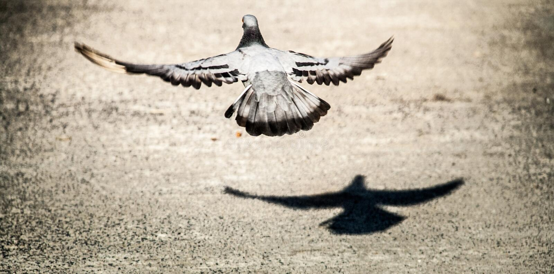 Der Felsen tauchte Fliegen und sein Schatten vom Boden für Freiheit lizenzfreie stockfotos