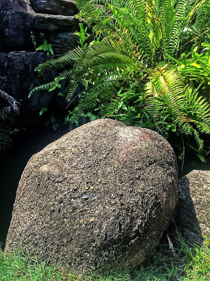 Der Felsen unter der wild wachsenden Pflanze stockfotografie