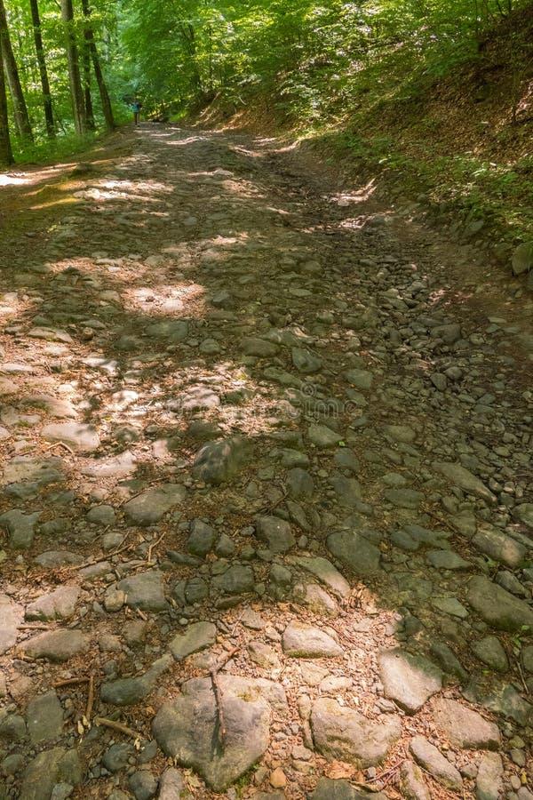 Der felsige Weg im Wald geht unter den Bäumen auf einer Seite und einer kleinen Steigung auf der anderen lizenzfreie stockfotografie