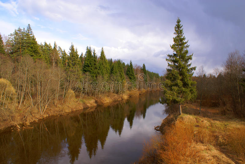 Der Fluss im Holz im Früjahr stockfotografie