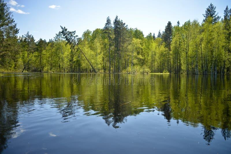 Der Fluss Pra Nationalpark Meshchersky Russland stockbild