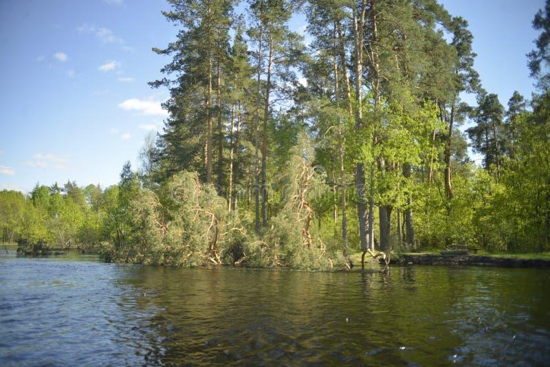Der Fluss Pra Nationalpark Meshchersky Russland stockfoto