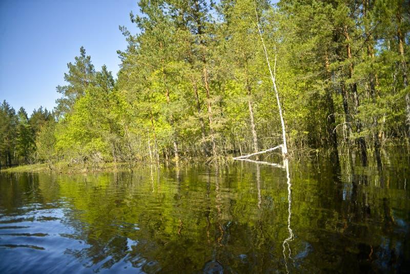 Der Fluss Pra Nationalpark Meshchersky Russland lizenzfreies stockfoto