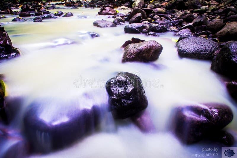 Der Fluss-Wald lizenzfreie stockfotos