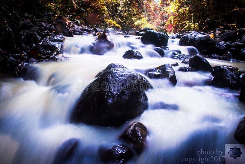 Der Fluss-Wald stockbilder