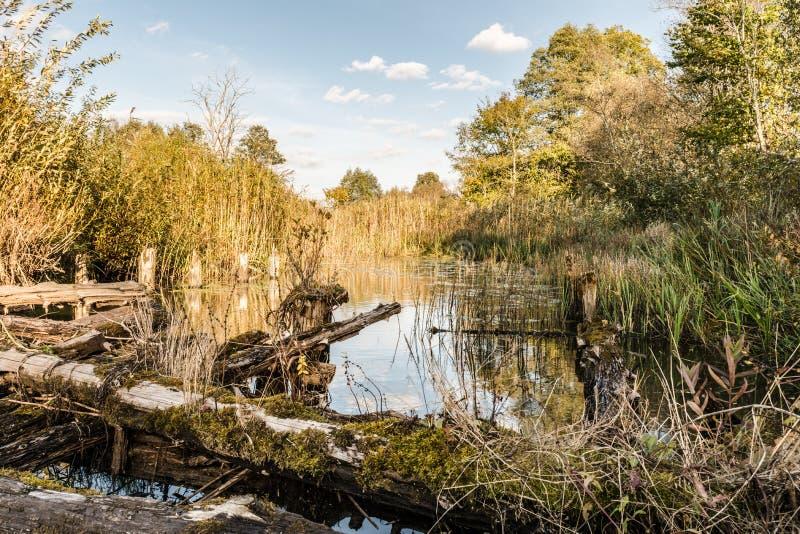 Der Fluss wird mit Vegetation, alte zerstörte Brücke von Klotz, Herbstlandschaft mit einem sumpfigen Teich, wildes Natur backgro  lizenzfreie stockbilder