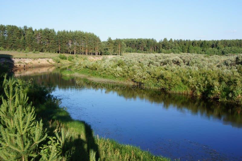 Der Flussbär in der Tver-Region lizenzfreies stockbild