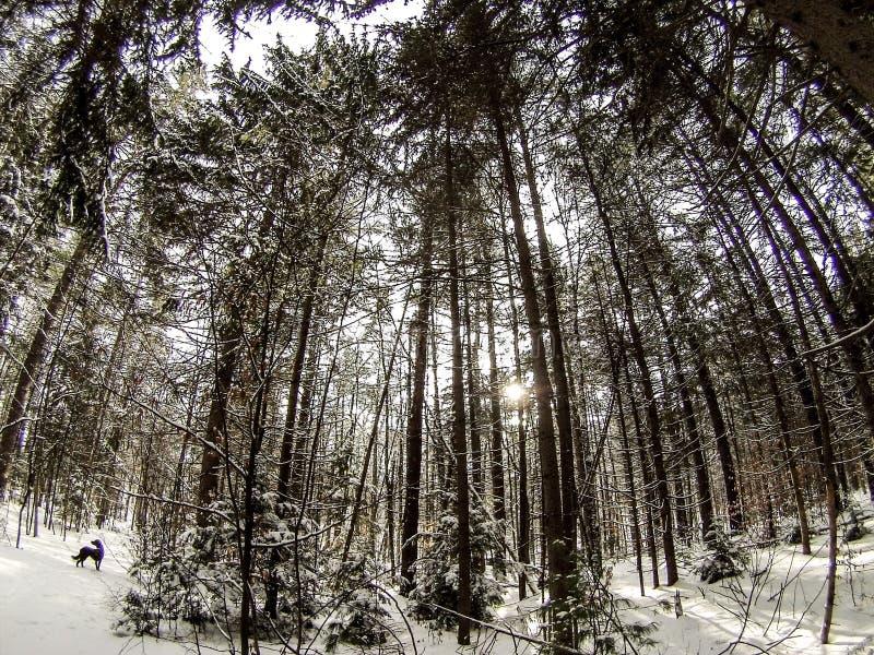 Der Forrest der Hexe stockfotos