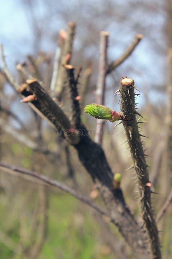 Der Frühling ist in vollem Gange stockfoto