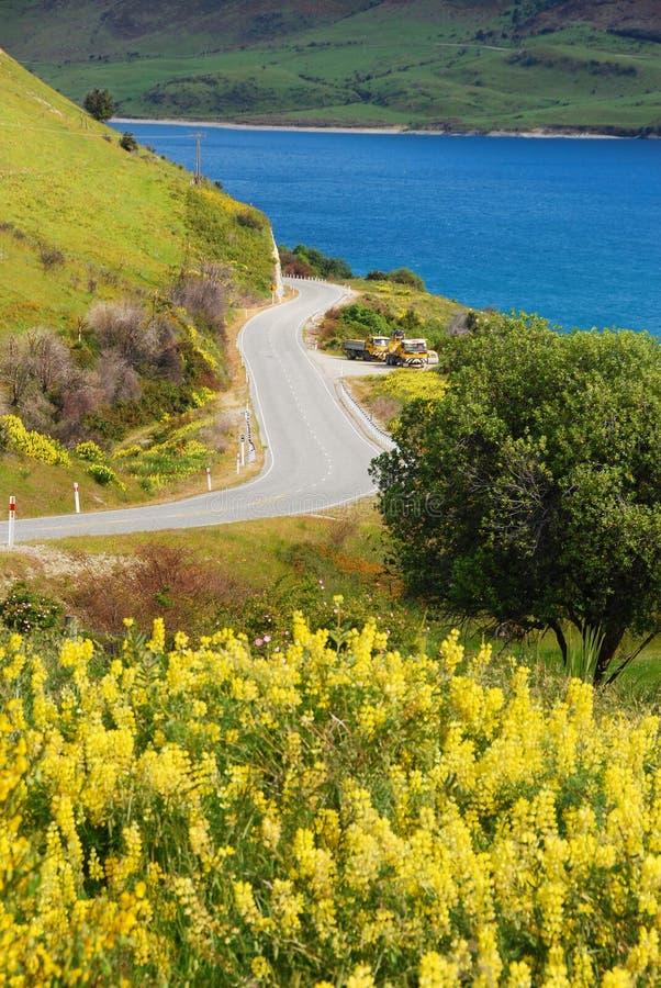 Der Frühling in Neuseeland stockbild