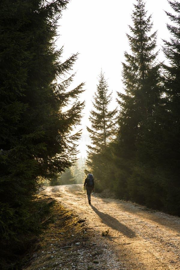 Der Frauenwanderer, der auf eine Gebirgsstraße geht, sonnen das Glänzen lizenzfreies stockfoto