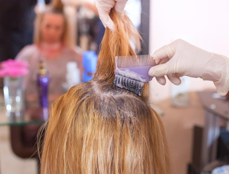 Der Friseur malt das Frau ` s Haar im Weiß, zutreffen die Farbe auf ihr Haar stockbild