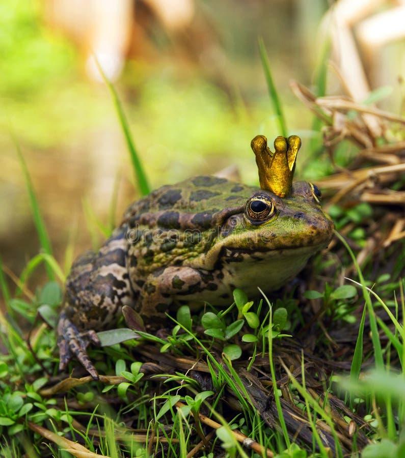 Der Frosch-Prinz stockfotografie