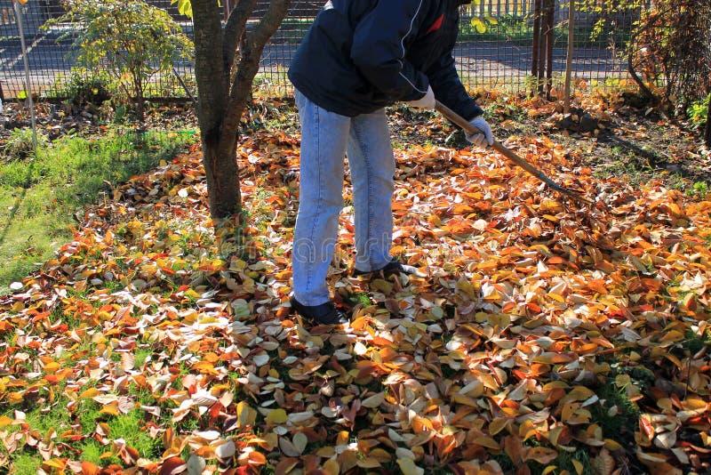 Der Gärtner harkt herauf einen Stapel des gefallenen Herbstlaubs im Garten lizenzfreie stockbilder