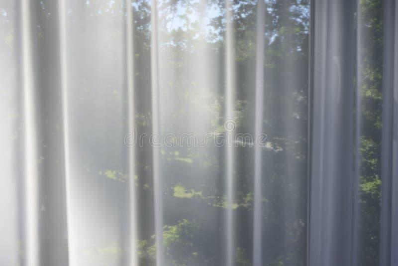 Der Garten im Fenster hinter den transparenten Vorhängen stockbild