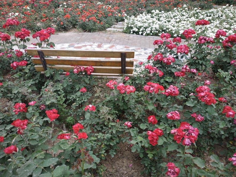 Der Garten ist von den roten und weißen Blumen voll stockfoto