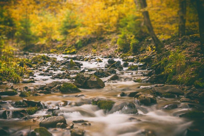 Der Gebirgsfluss im Herbstwald, Neigungsverschiebung stockbild