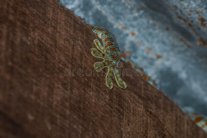 der Gecko auf Dach lizenzfreies stockbild