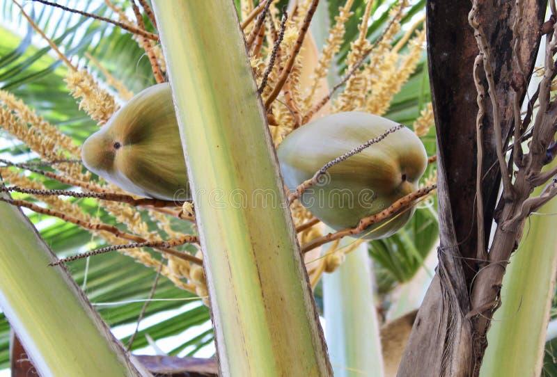 Der geheime schöne verzauberte Garten in Tulum lizenzfreie stockbilder